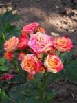 Шепчут цветы свои речи беззвучные, тайны неведомой ждут, вплоть до рассвета с луной неразлучные грезят они и цветут...