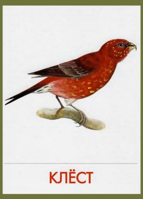 картинки для детей птицы перелетные