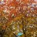 Палитра осени - все цвета и оттенки радуги..