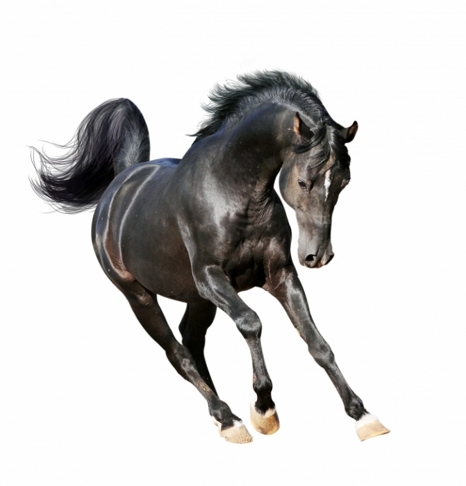 Фото лошади белые