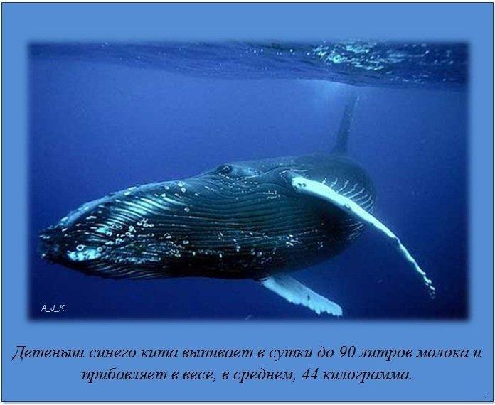 http://img0.liveinternet.ru/images/foto/c/1/apps/4/995/4995688_16.jpg