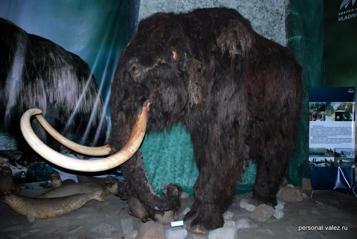Сам мамонт, утверждают, что шерсть настоящая