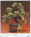 ПЛЕТЕНИЕ/Цветы и деревья из бисера. плетение из бисера.  Это цитата сообщения.
