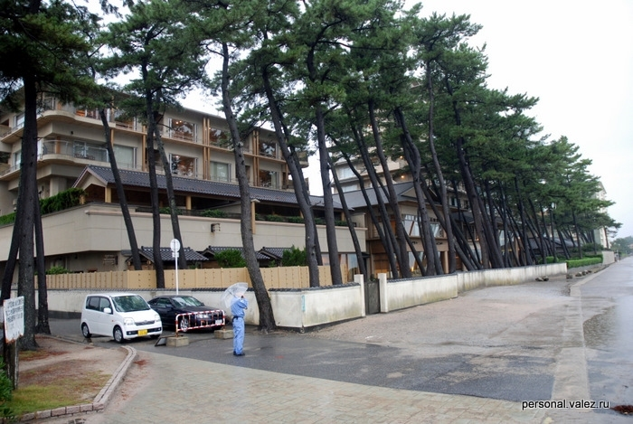 Соседний отель и падающие сосны