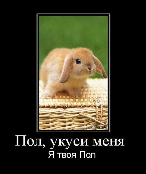 http://img0.liveinternet.ru/images/foto/c/9/apps/2/337/2337838_x_1d47480f.jpg