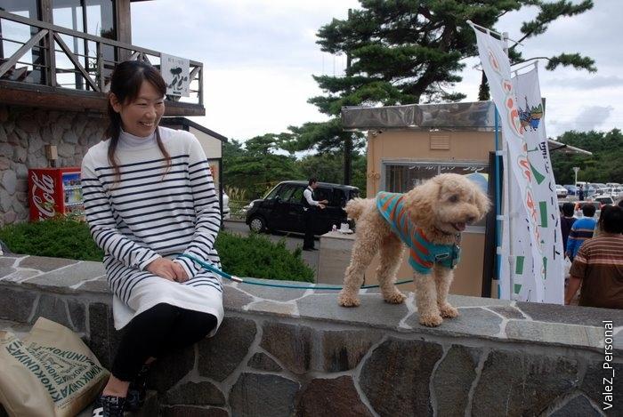 Очень трогательно японцы относятся к собачкам. А гейши обязаны играть на инструменте, сделанном из кошки.