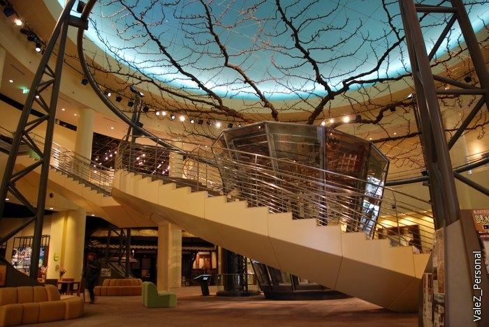 Огромное грушевое дерево в центре музея