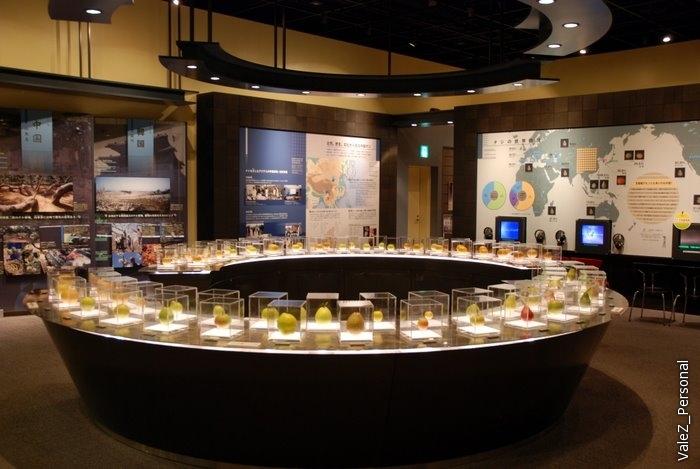 Главный зал экспозиции груши