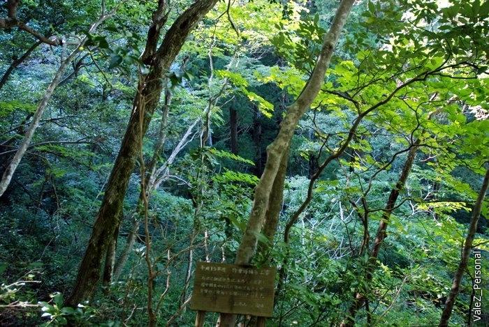 Вокруг - невероятная девственная природа японских гор