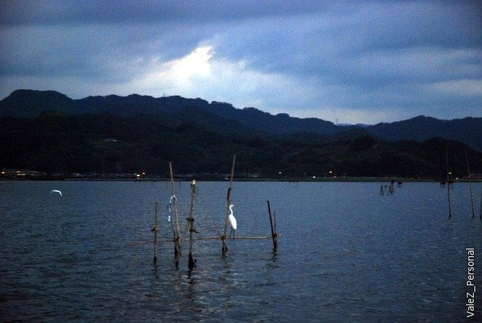 На озере цапли.