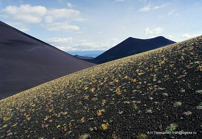 Геометрия конусов - Толбачинский дол, август 1998 г. Трещинное Толбачинское извержение лета 1975 года.  Вулканические конуса спустя 32 года после извержения.