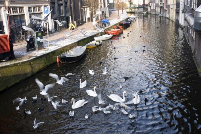 Люди частенько подкармливают  птиц в каналах.