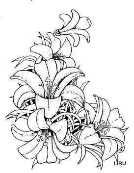 Шаблоны для цветов рисования