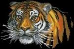 свой цитатник или сообщество!  Уссурийский тигр.  Вышивка крестом, схемы. источник.  Прочитать целикомВ.