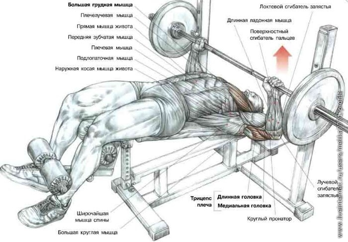упражнения для мышц пресса - Рабочие схемы и описания в быту.