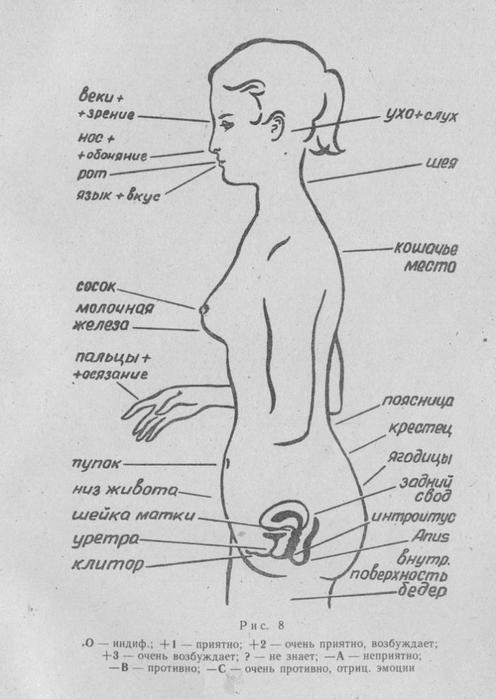 Чувствительные точки у женщин в картинках