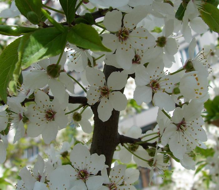 Картинки дню, открытка встречай цветущий май