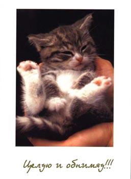 картинки с котятами с надписями про любовь