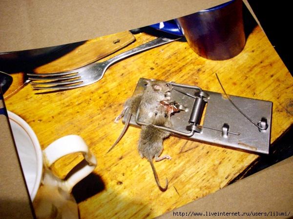 две мышки в мышеловке. сфоткано by Lilumi