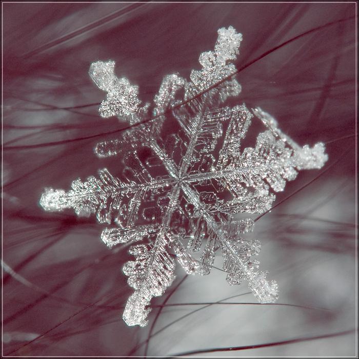 получается картинки снежинка люблю еще помню чтонаклейки