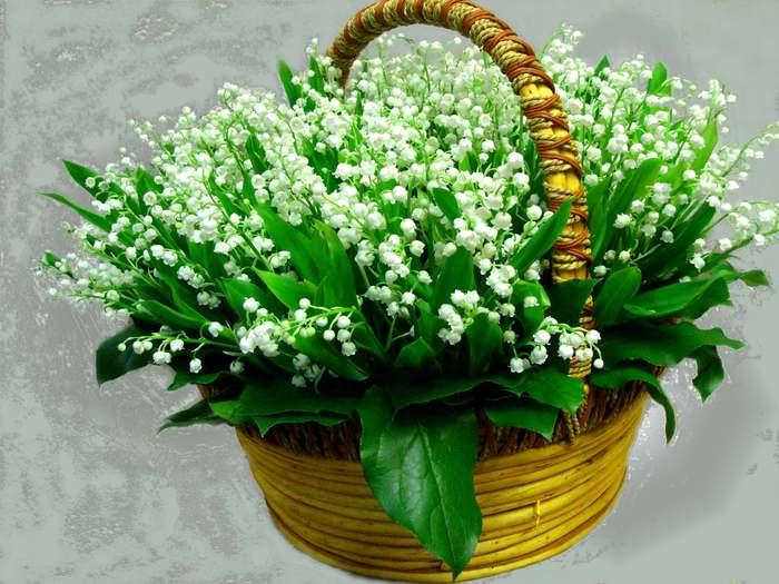 http://img0.liveinternet.ru/images/attach/b/3/22/332/22332993_landishib.jpg