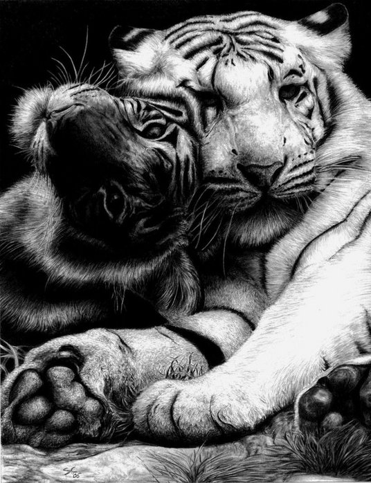 лев и тигрица картинка черно белая втрачай