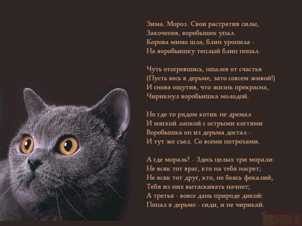 https://img0.liveinternet.ru/images/attach/b/3/6/939/6939733_Basnya_pro_vorobishku.jpg