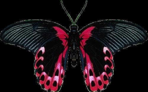 0_ad04f_584eaba5_L (500x312, 177Kb)