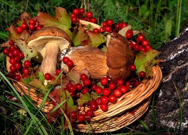 дары леса картинки