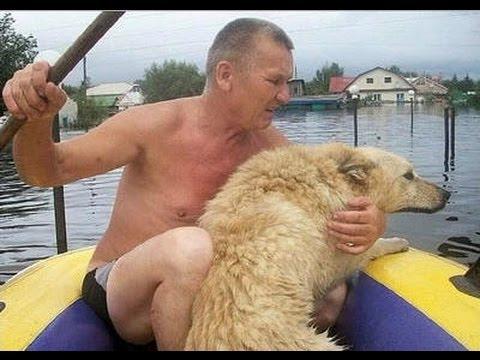 Пес охранял затопленный дом по шею в воде/3518263_hqdefault_1_ (480x360, 38Kb)
