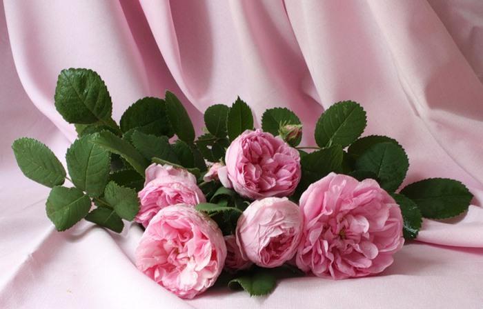 Натюрморты Розовые розы 0_e07f_9542a55e_XL (700x448, 78Kb)