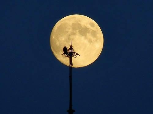 луна ночь стихи