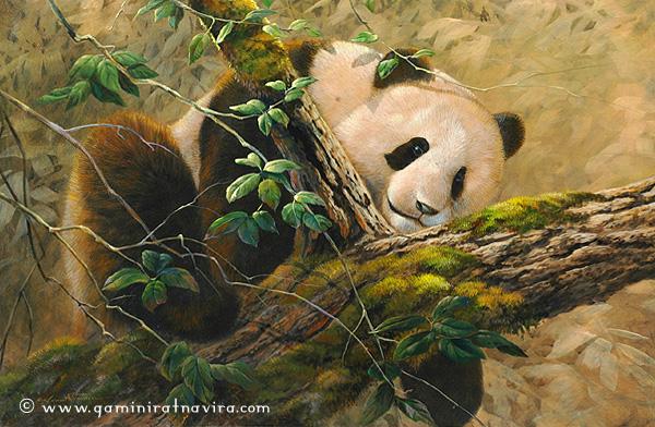 Panda (600x392, 323Kb)