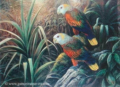 stvincentparrots (504x367, 195Kb)