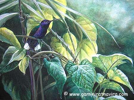 violetsaberwing (450x338, 194Kb)