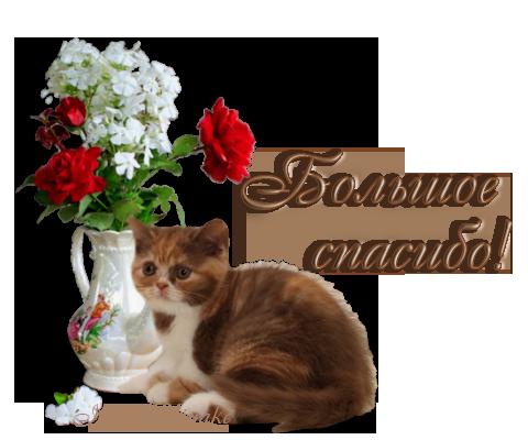 Картинки спасибо с кошками красивые