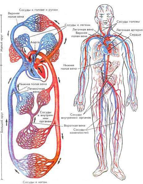 болезни сердечно-сосудистой системы - Самое интересное в блогах