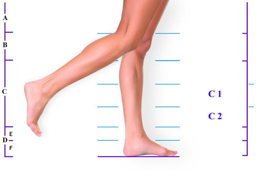 имя части ноги человека фото располагаем