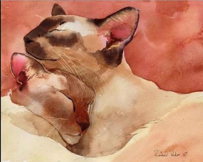 Кошачьи акварели Rachel Parker. (700x558, 129Kb)