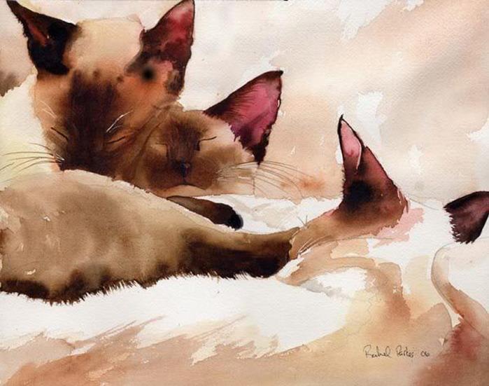 Кошачьи акварели Rachel Parkerx_e9921715 (700x551, 114Kb)