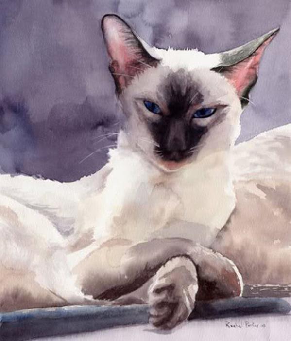 Кошачьи акварели Rachel Parkerx_3402cc52 (599x700, 91Kb)