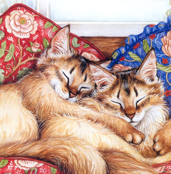 CATS-PICTURES_ORG_-_5892-900x915-debbie+cook-lying-red+hair-tail-tall+image-brown+nose (688x700, 328Kb)