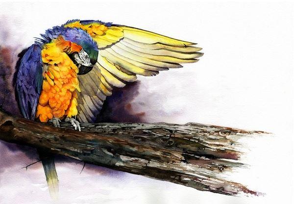 Peter-Williams.-Animalizm-v-akvareli. (600x416, 189Kb)