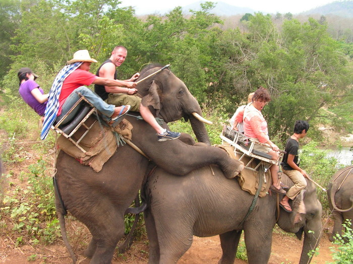 Как трахаются слоны