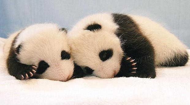 ребенок панды