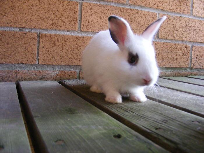 Скачать книгу уход за кроликами