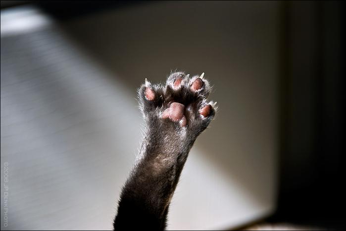 http://img0.liveinternet.ru/images/attach/c/0//48/169/48169812_1251656301_35_cats.jpg