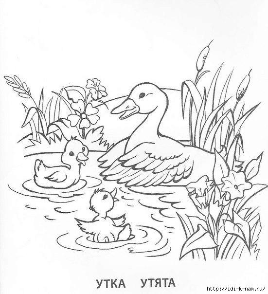 раскраска домашние животные и птицы и их детеныши