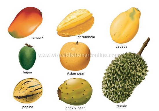 tropical-fruits_4 (550x384, 95Kb)