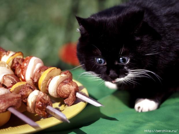Натуралка для котят рецепты